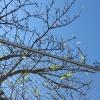 10月、沖縄に季節外れの桜咲く!