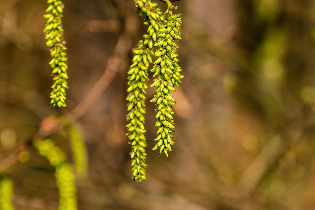 ☆花粉症対策、花粉の季節にこそウィークリーマンスリーで沖縄滞在のすすめ☆